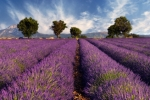 Lavender is one of my favorite scents!