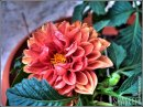 Great inspiration - I love the color variations from this vibrant flower!