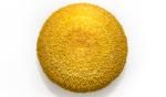 Federico Uribe, 'Chrysanthemum' Sculpture using yellow colored pencils